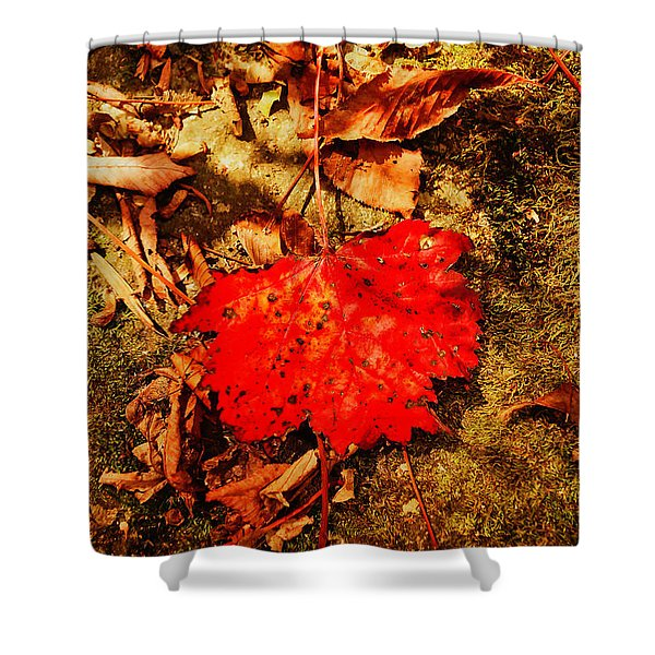 Shower Curtain featuring the photograph Red Leaf On Mossy Rock by Meta Gatschenberger