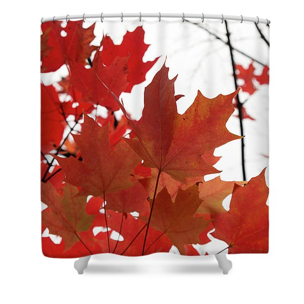 Red Maple Leaves 2 Shower Curtain