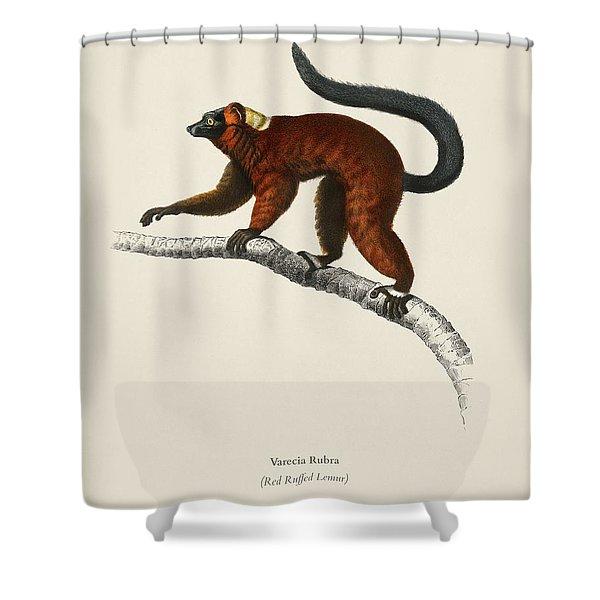 Red Ruffed Lemur  Varecia Rubra  Illustrated By Charles Dessalines D' Orbigny  1806-1876  Shower Curtain