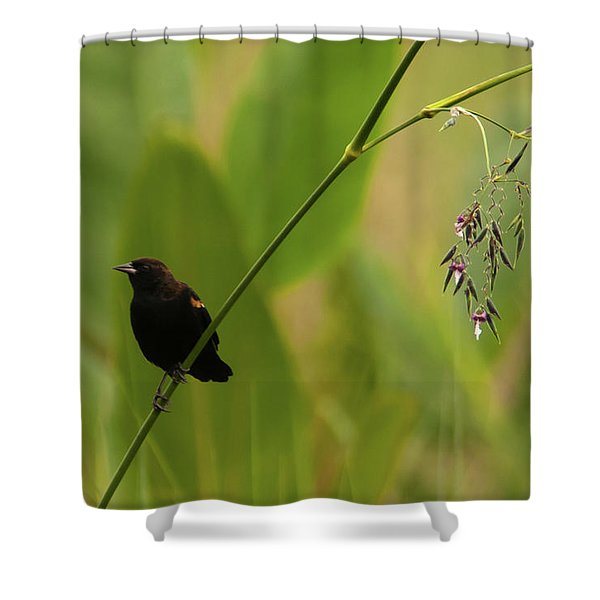 Red-winged Blackbird On Alligator Flag Shower Curtain