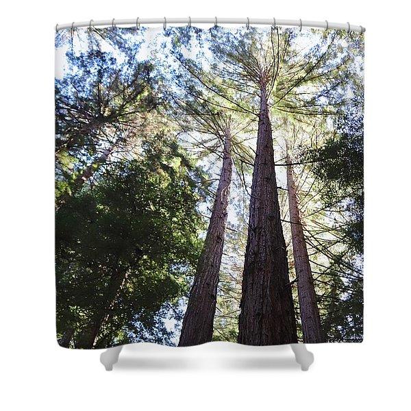 Redwoods, Blue Sky Shower Curtain