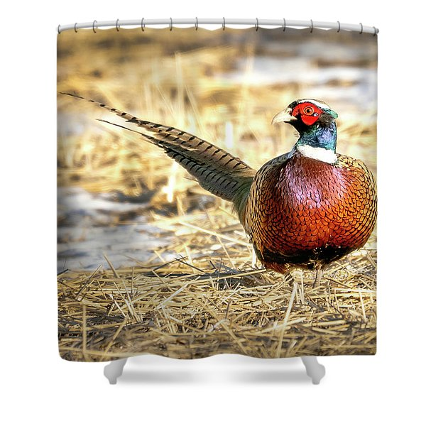 Ring-necked Pheasant Portrait Shower Curtain