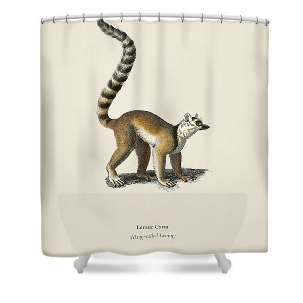 Ring-tailed Lemur  Lemur Catta  Illustrated By Charles Dessalines D' Orbigny  1806-1876  Shower Curtain