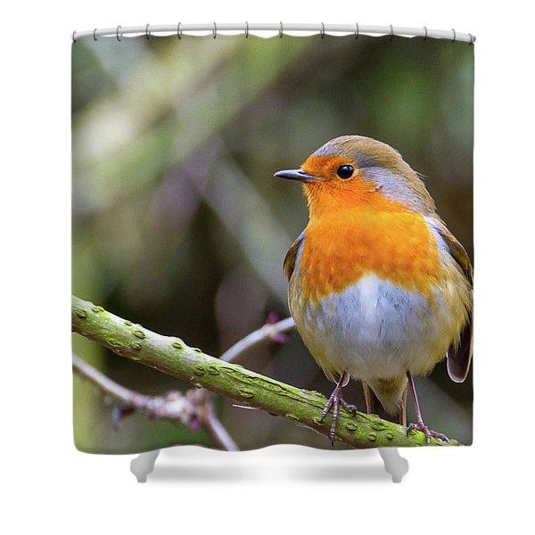 Robin. On Guard Shower Curtain