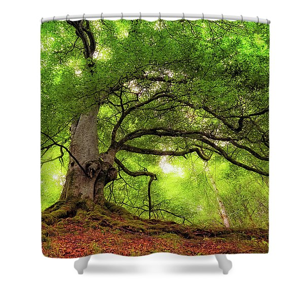 Roots Of Taymouth Estate - Scotland - Beech Tree Shower Curtain