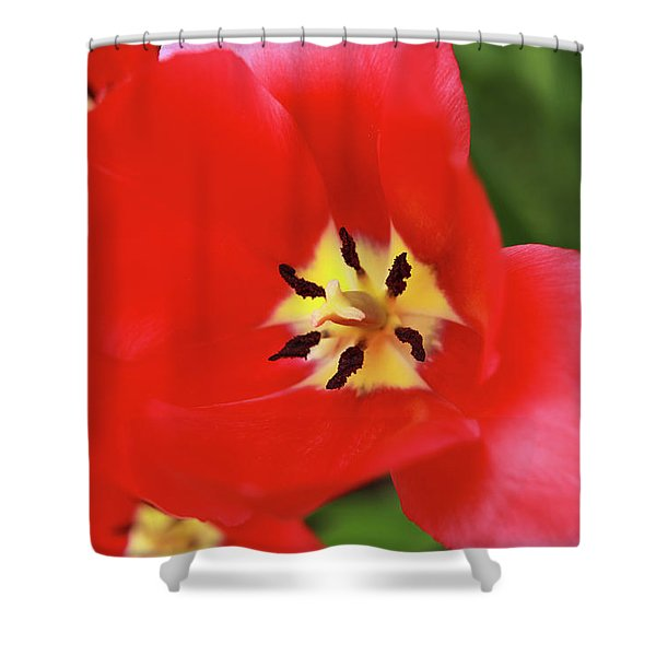 Shower Curtain featuring the photograph Rouge Bloom by Emily Johnson
