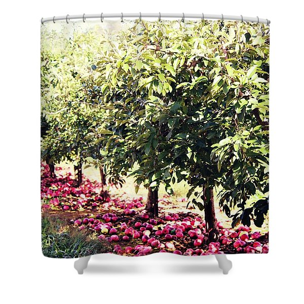 Row Of Red Shower Curtain