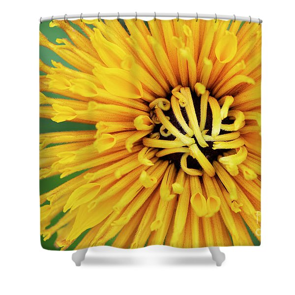 Rudbeckia Chim Chiminee Shower Curtain