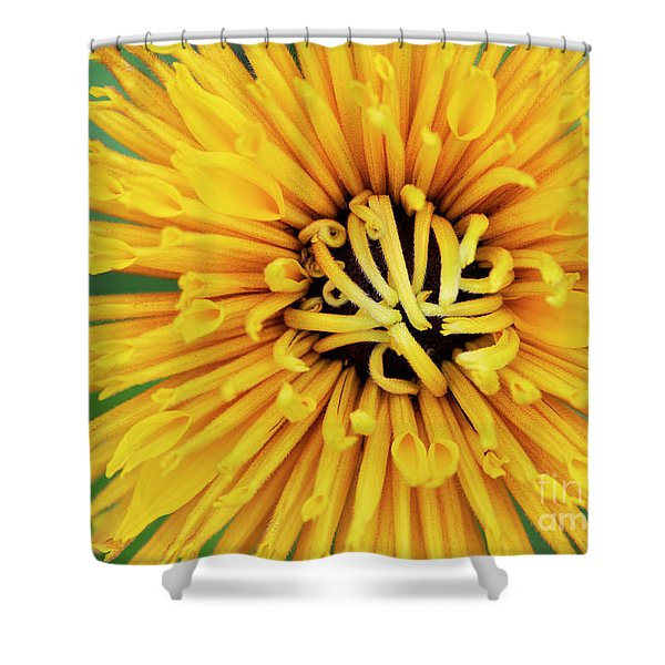 Rudbeckia Chim Chiminee Shower Curtain