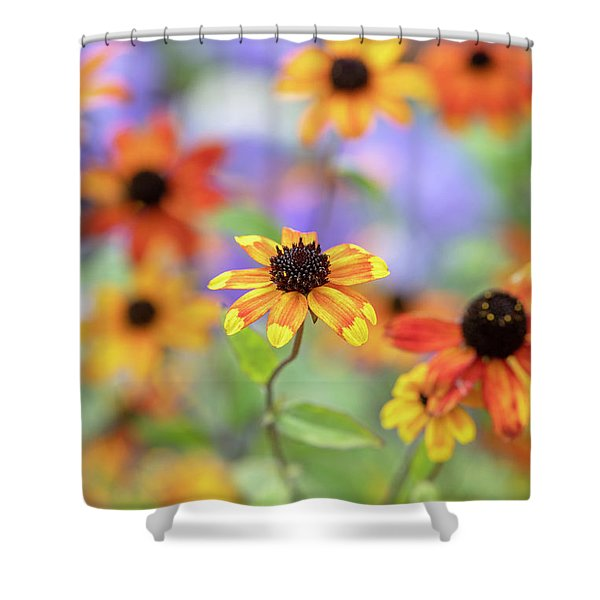 Rudbeckia Triloba Prairie Glow Flowers Shower Curtain