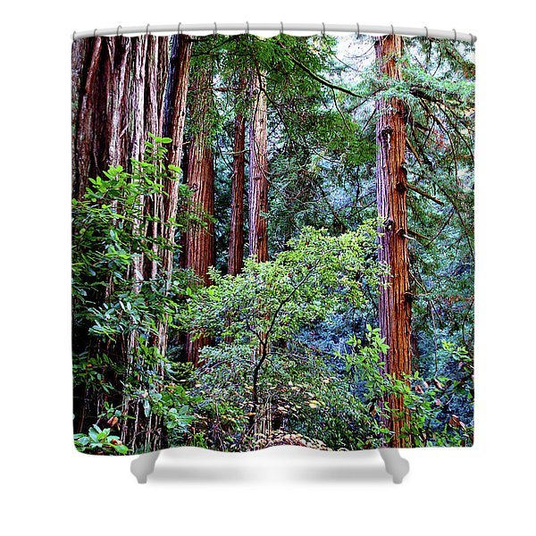 Samuel Taylor Redwoods 1 Shower Curtain