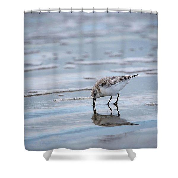 Sanderling Foraging Shower Curtain