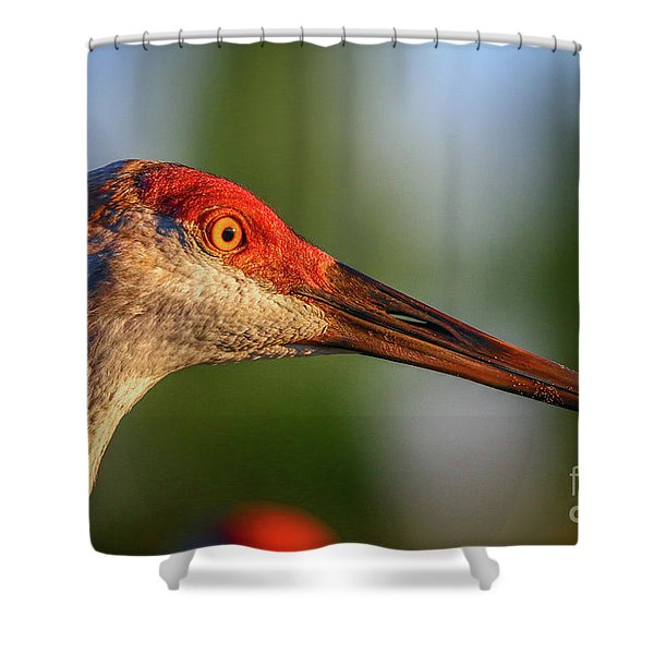 Shower Curtain featuring the photograph Sandhill Sunlight Portrait by Tom Claud