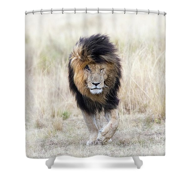 Scar The Lion Shower Curtain