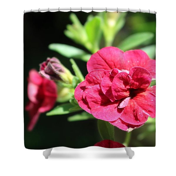 Scarlet Geranium In Cape May Shower Curtain