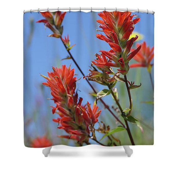 Scarlet Indian Paintbrush At Mount St. Helens National Volcanic  Shower Curtain