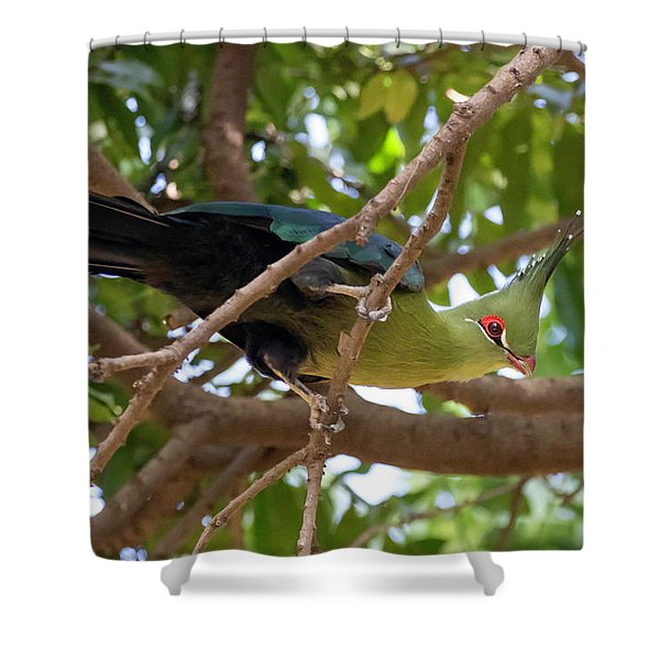Schalow's Turaco Shower Curtain