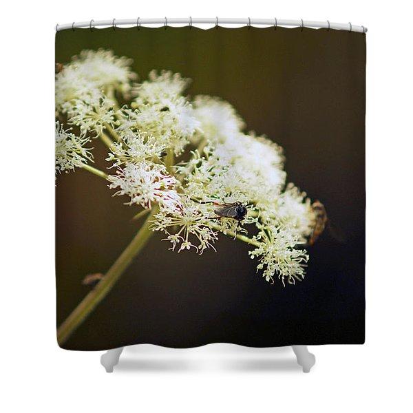 Scotland. Loch Rannoch. White Flowerhead. Shower Curtain