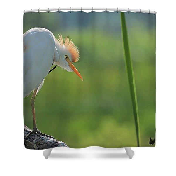 Scratching  Shower Curtain