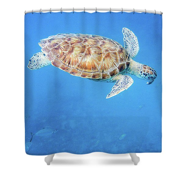 Sea Turtle And Fish Swimming Shower Curtain