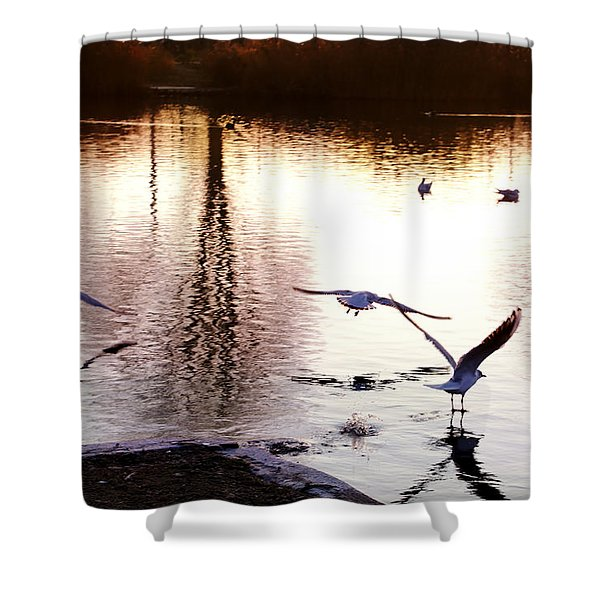 Seagulls In The Morning Shower Curtain