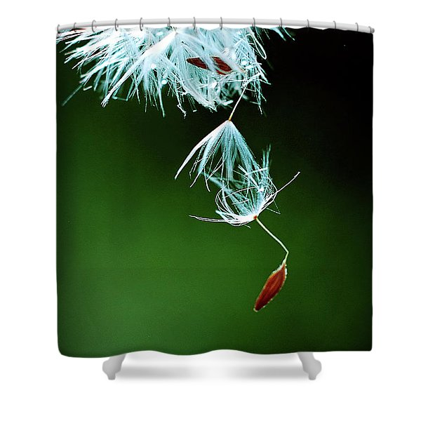 Shower Curtain featuring the photograph Seeking by Michelle Wermuth