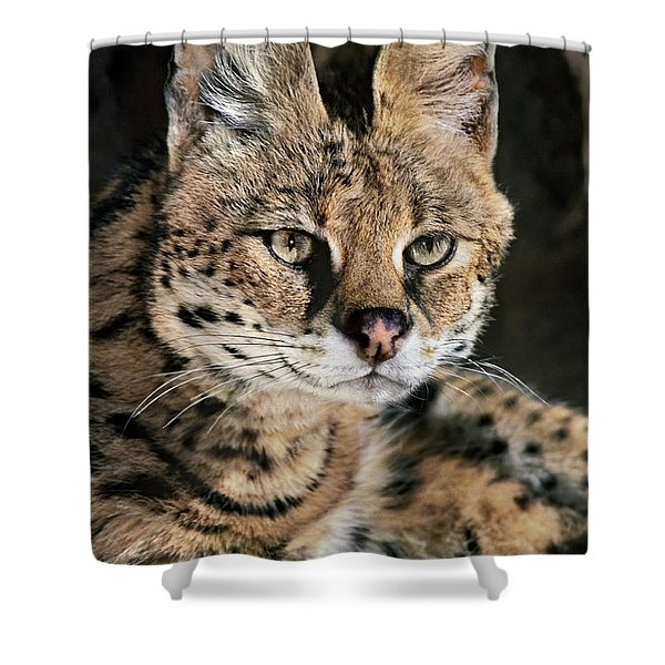 Serval Portrait Wildlife Rescue Shower Curtain