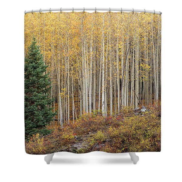 Shimmering Aspens Shower Curtain