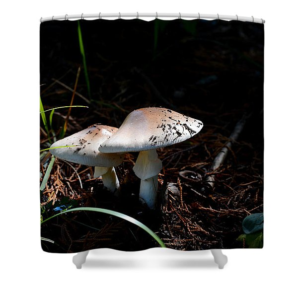 Shrooms In Low Light Shower Curtain
