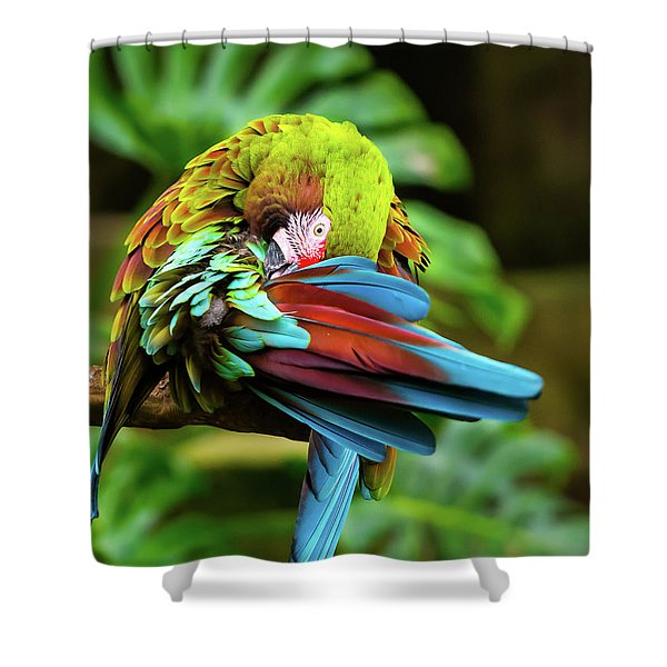 Shy Parrot Shower Curtain
