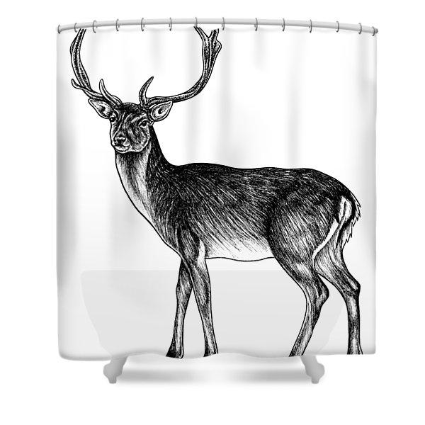 Sika Deer Stag - Ink Illustration Shower Curtain