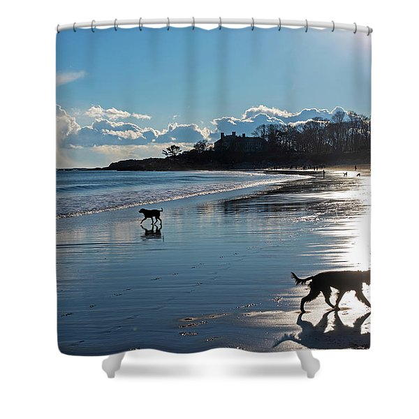 Singing Beach Dogs At Play Manchester Ma Shower Curtain