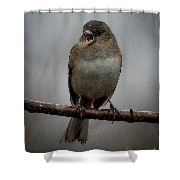 Singing Junco 1 Shower Curtain