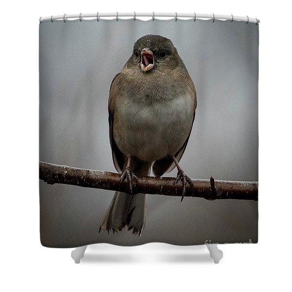 Singing Junco 2 Shower Curtain