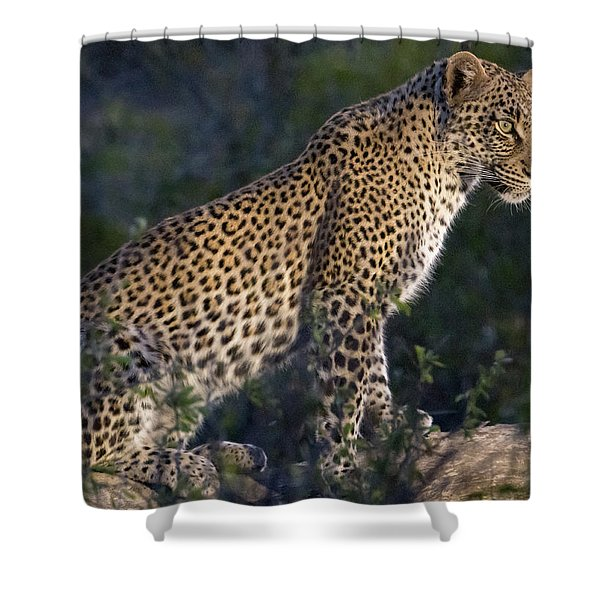 Sitting Leopard Shower Curtain