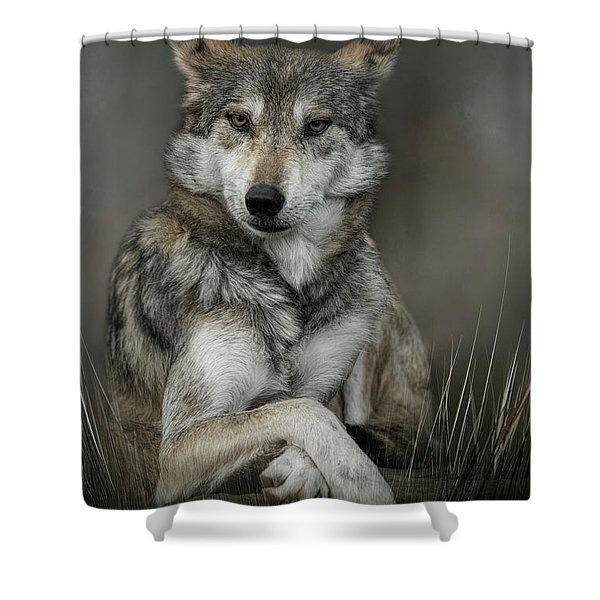 Sitting Pretty Shower Curtain