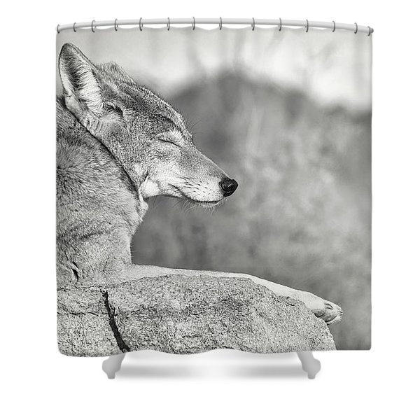 Sleepy Coyote Shower Curtain