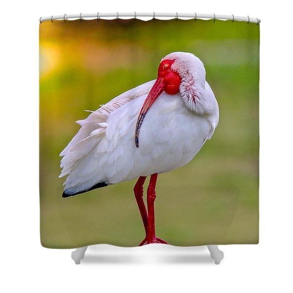 Sleepy Ibis Shower Curtain