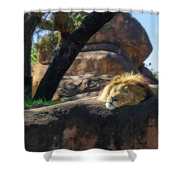 Sleepy Lion Shower Curtain