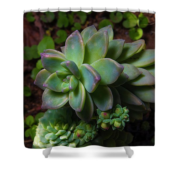 Small Succulents Shower Curtain