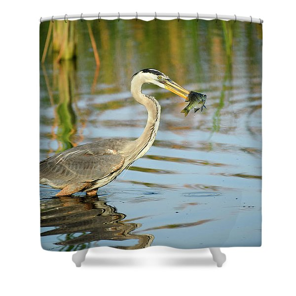 Snack Time For Blue Heron Shower Curtain