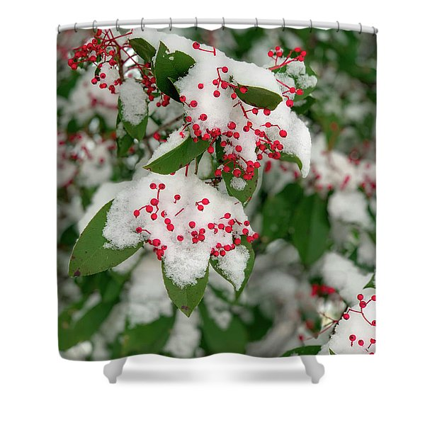 Snow Covered Winter Berries Shower Curtain