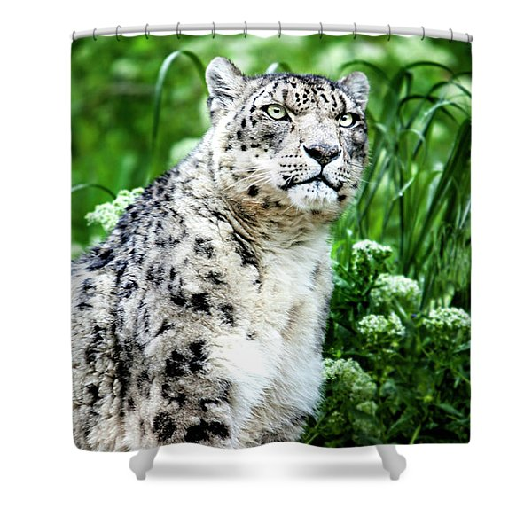 Shower Curtain featuring the photograph Snow Leopard, Leopard Art, Animal Decor, Nursery Decor, Game Room Decor,  by David Millenheft