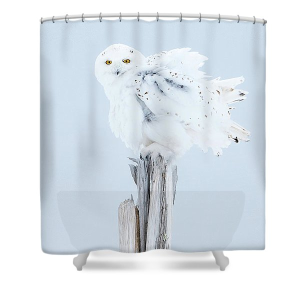 Snowy Owl Feather Shake Shower Curtain