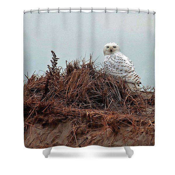 Snowy Owl In The Dunes Shower Curtain