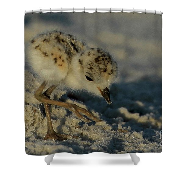Snowy Plover On The Hunt Shower Curtain