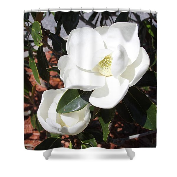 Snowy White Gardenia Blossoms Shower Curtain