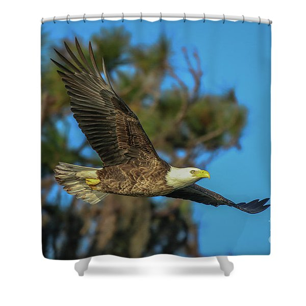 Shower Curtain featuring the photograph Soaring Eagle by Tom Claud