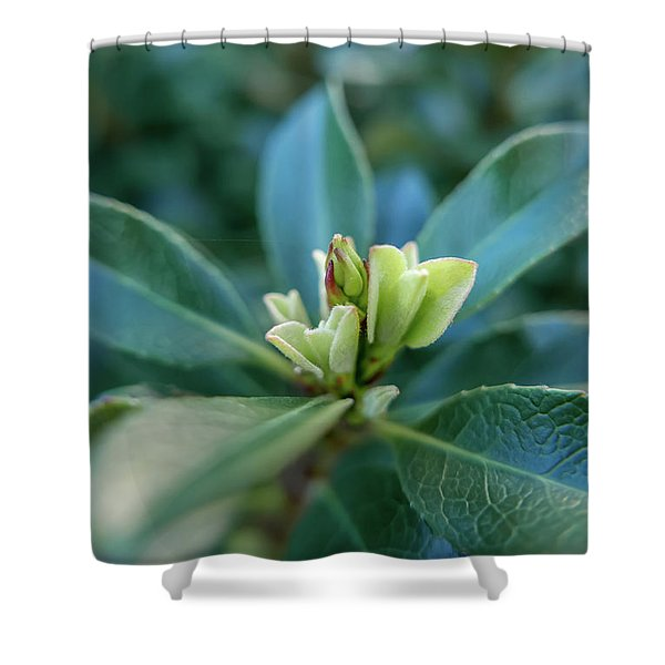 Softly Blooming Shower Curtain