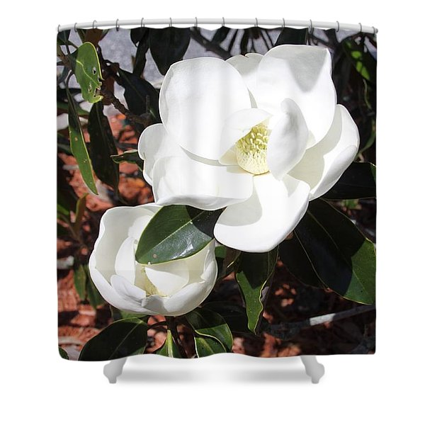 Sosouthern Magnolia Blossoms Shower Curtain